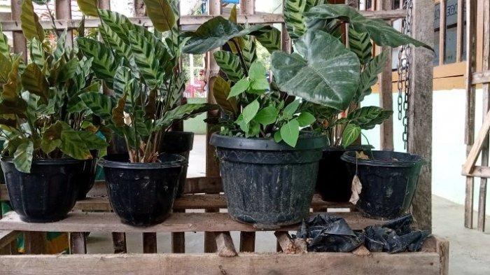 Berbagai tanaman hias koleksi Taman Wisata Alam Segar, Pekon Giham Sukamaju, Sekincau, Lampung Barat, Jumat (23/7/2021).