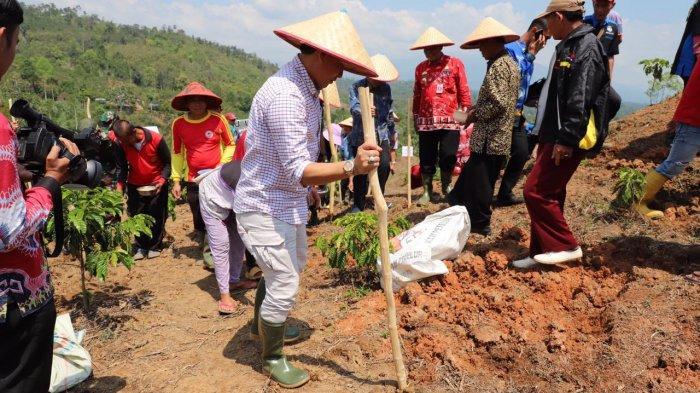 500 Hektare di Lambar Ditanami Kedelai
