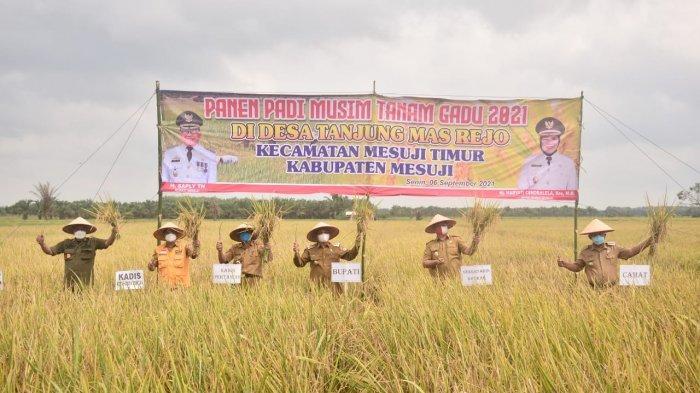 Bupati Mesuji Saply TH bersama jajaran Pemerintah Kabupaten Mesuji melaksanakan panen raya padi musim tanam gadu, Senin (06/09/2021) di Desa Tanjung Mas Rejo, Kecamatan Mesuji Timur.