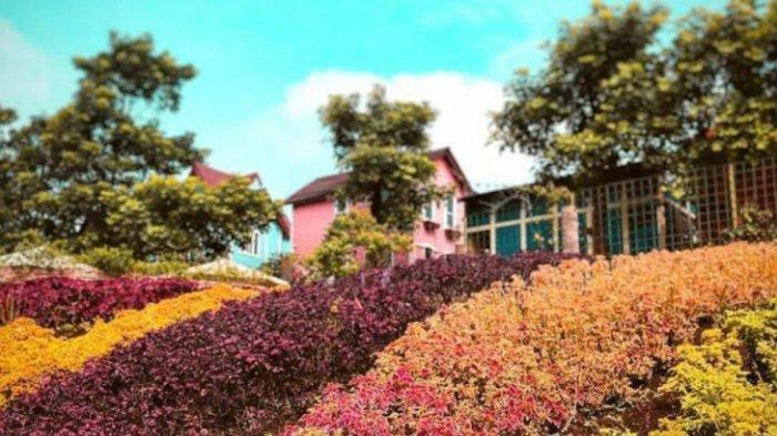 Tempat Wisata di Bandung, Indahnya Hamparan Bunga di Rainbow Garden Lembang