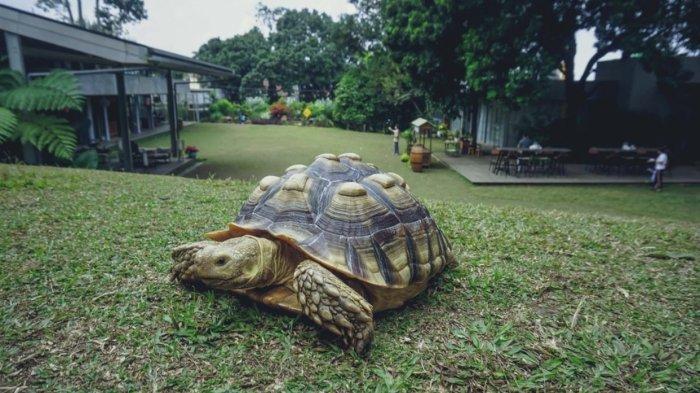Tempat Wisata di Bandung, Cicipi Sajian 7 Kafe Sekaligus di Nara Park