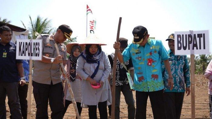 Bupati Pesisir Barat Pimpin Temu Lapang Tugal Perdana Padi Ladang dan Pengukuhan Pengurus KTNA.