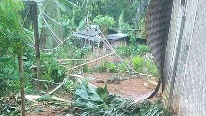 Terjadi Serangan Kawanan Gajah, 48 Rumah di Lampung Barat Rusak, Warga Diungsikan
