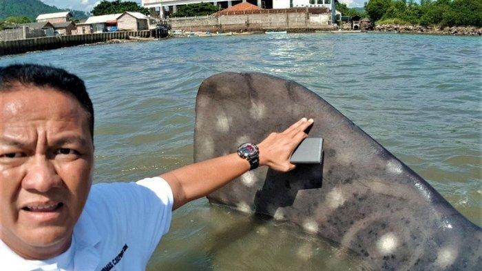 Owner Tegal Mas, Thomas Azis Riska, menunjuk hiu tutul sepanjang 15 meter yang sempat terdampar di pantai Sukaraja Lampung, April 2018. Hiu paus kembali muncul di perairan Tegal Mas pada Selasa 16 Maret 2021.