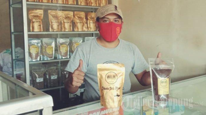 Ubeloe Kopi di Ulu Belu Tanggamus Sudah Rambah Pasar dari Sumatera hingga Papua