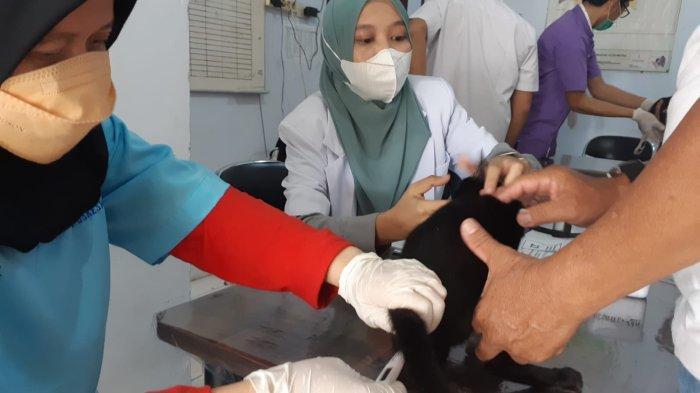 Wali Kota Metro Lampung Imbau Pecinta Hewan Komitmen Bebas Rabies