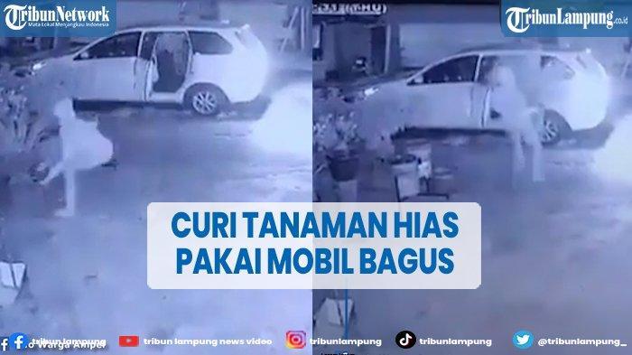 Viral Video Pencuri Tanaman Hias Beraksi Pakai Mobil Bagus