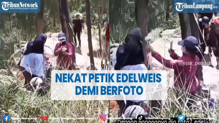 Telah Dilarang, Pendaki Wanita Nekat Berfoto Pegang Bunga Edelweis