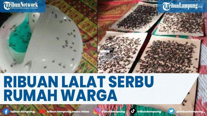 Viral Ribuan Lalat Serbu Rumah Warga Koto Tingga di Kabupaten Solok
