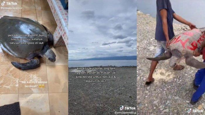 Video Viral Seorang Wanita Membeli Penyu untuk Dilepas ke Laut