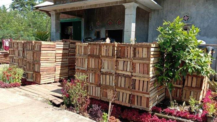 Warga Lampung Barat Heri Budianto Jual Kotak Tomat Harga Mulai Rp 9 Ribu