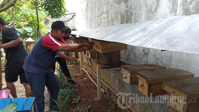 Warga Tejoagung Kota Metro Kembangkan Madu Klanceng, Imbas Pandemi Covid-19