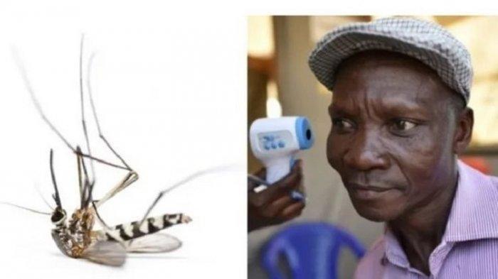 Halo Dokter, Apa Itu Malaria dan Pencegahannya
