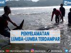 detik-detik-penyelamatan-lima-lumba-lumba-terdampar-di-pantai-sidem-tulungagung.jpg