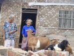 dua-nenek-kakak-beradik-di-karawang-tinggal-serumah-dengan-kambing.jpg