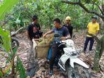 durian-pks_20180116_200024.jpg