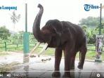 gajah-di-lembah-hijau_20180219_135426.jpg