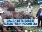 gajah-di-taman-safari-indonesia-diberi-nama-pulih-indonesia.jpg