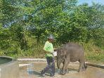 gajah-erin_20180325_170055.jpg
