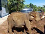 gajah-erin_20180326_164853.jpg