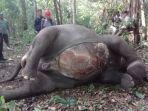 gajah-liar-di-way-kambas_20180213_162746.jpg