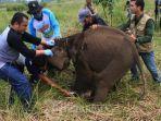 gajah-liar-yang-masuk-pemukiman-warga-telah-diusir-kembali-ke-hutan-tnbbs.jpg