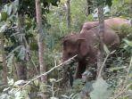gajah-liar_20170820_235638.jpg