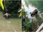gajah-mati-berdiri-di-sungai.jpg