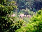 gajah-tanggamus_20170901_182851.jpg