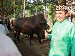 gubernur-lampung-serahkan-sapi-kurban_20170901_092819.jpg