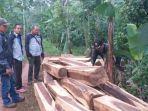 kayu-sonokeling-illegal-logging.jpg