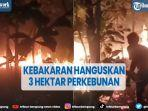 kebakaran-hanguskan-lahan-perkebunan-seluas-tiga-hektare.jpg