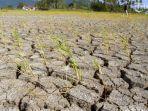 masuki-musim-kemarau-bmkg-lampung-imbau-petani-tanam-tanaman-minim-kebutuhan-air.jpg