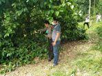 mayat-anonim-ditemukan-di-pohon-manggis.jpg