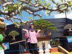 pameran-dan-kontes-bonsai-tingkat-nasional-di-kebun-raya-liwa-krl.jpg