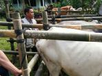 pemeriksaan-massal-hewan-ternak_20180806_202409.jpg