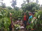 petani-kopi-di-lambar-keluhkan-hama-menyerang-tanaman-kopi-padahal-buahnya-sedang-bagus.jpg