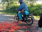 petani-tomat-pagaralam-jumat-782020-dengan-sengaja-membuang-hasil-panennya-di-jalan.jpg