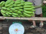 pisang-ilustrasi.jpg