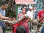 ular-piton-panjang-empat-meter.jpg