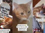 viral-kucing-menangis-saat-pemiliknya-meninggal-berhenti-setelah-dibawa-ke-pemakaman.jpg