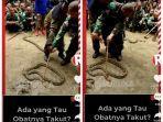 viral-perajurit-tni-uji-nyali-dengan-ular.jpg