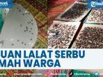viral-ribuan-lalat-serbu-rumah-warga-koto-tingga-di-kabupaten-solok.jpg