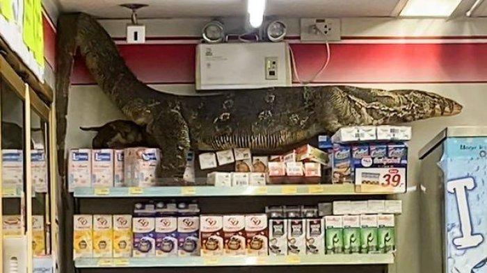 VIRAL Video Biawak Raksasa Hampir 2 Meter Terekam Kamera Masuk Minimarket, Panjat-panjat Rak Makanan