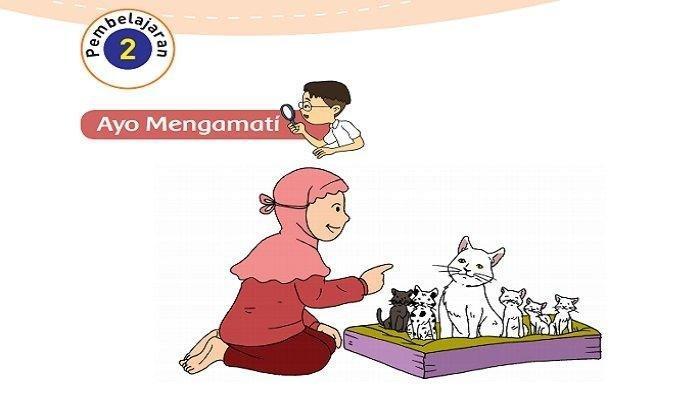 Kunci Jawaban Buku Tematik Kelas 3 Sd Subtema 3 Pembelajaran 1 Materi Pertumbuhan Hewan Halaman All Tribun Lombok
