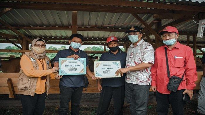 Gubernur NTB Lepas 200 Sapi di Food Estate Labangka, 800 Sapi Bakal Dikirim 2021