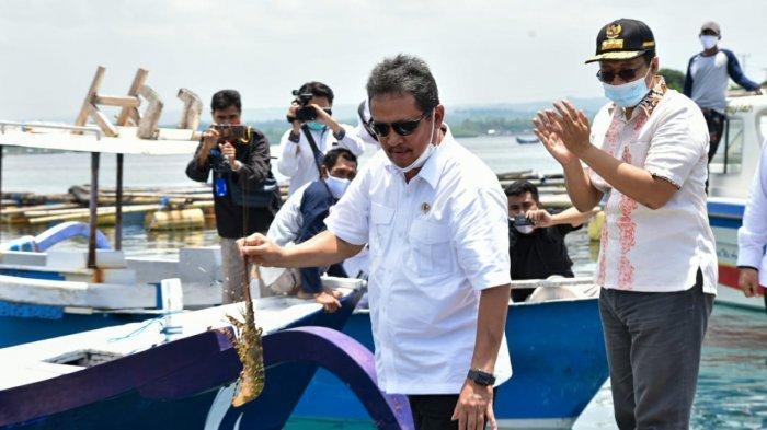 Kawasan Telong Elong Lombok Akan Jadi Pusat Budi Daya Lobster Nasional