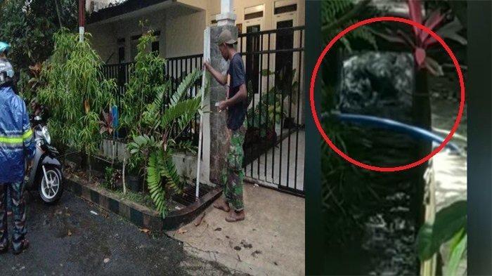 Hewan Misterius Mirip Buaya Panjang 3 Meter Berkeliaran di Selokan Depan Rumah, Warga Panggil Damkar