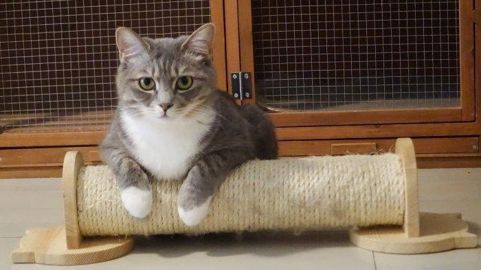 Kenali Penyakit Parasit pada Kucing: Penyebab, Gejala hingga Pengobatan