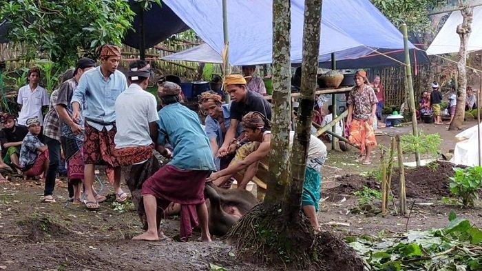 Ritual Ngasuh Gunung, Cara Warga Lombok Menjaga Kesucian Alam Rinjani